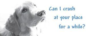Dog Foster Image